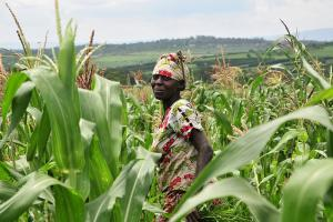 Tackling Agri-finance risk like a pro: Insights from Kenya's Central Bank