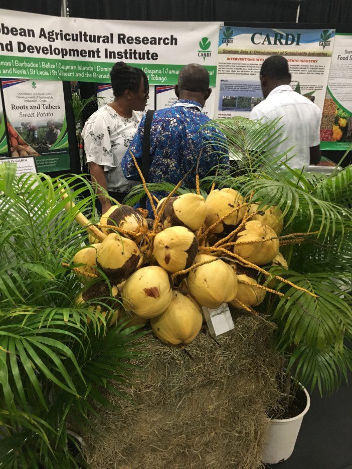 coconuts - potential