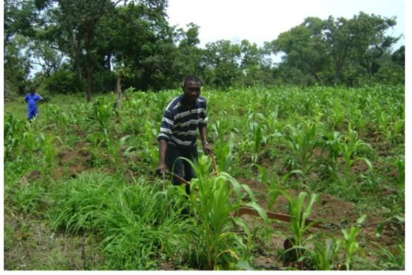 Le financement mixte pour l'agriculture africaine : Innovation dans le développement, Partenariats Public-Privé