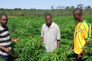 RDC : Manioc, ce n'est pas l'affaire du producteur seul
